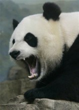 Google Panda is Fierce