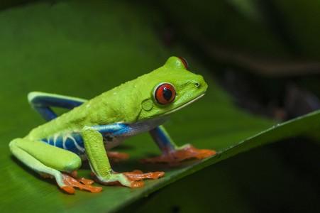 https frog